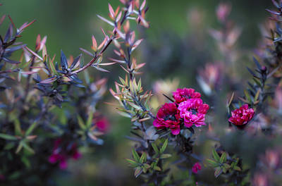Impressionism Photos - Wildflowers on a Cloudy Day by Jade Moon