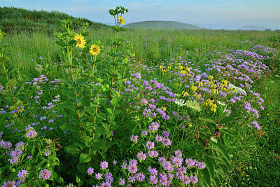 Photograph - Wildflowers On Glacial Kames In Glacial Park by Ray Mathis
