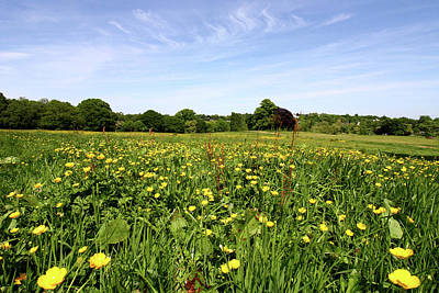 Photograph - Wildflowers On Hampstead Heath, London, England by Aidan Moran