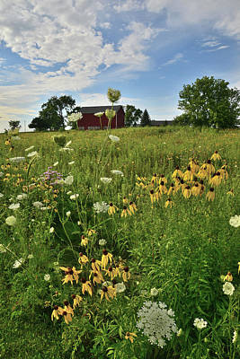 Photograph - Wildflowers On Midwest Farm by Ray Mathis