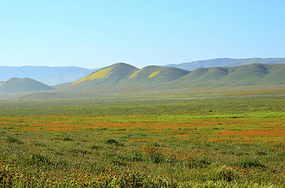 Photograph - Wildflowers On The Carrizo Plains by Barbara Snyder