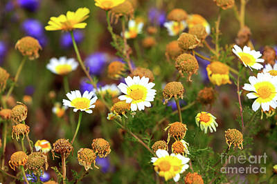 Photograph - Wildflowers On The Island Of Delos by John Rizzuto