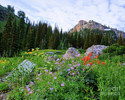 Photograph - Wildflowers On The Peak by Roxie Crouch
