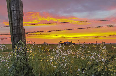 Wildflowers On The Ranch Art Print