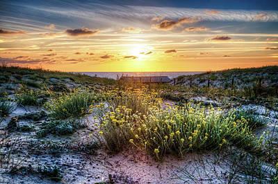 Wildflowers On The Sand Dunes Art Print by Debra and Dave Vanderlaan