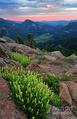 Photograph - Wildflowers On Trail Ridge Road In Rocky Mountain National Park  by Ronda Kimbrow