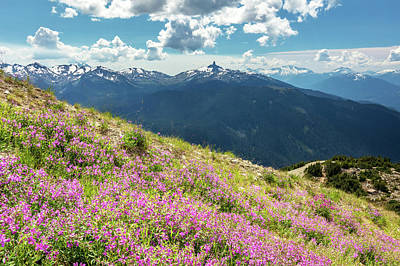 Art Print featuring the photograph Wildflowers On Whistler Mountain by Pierre Leclerc Photography