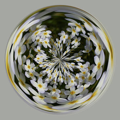Art Print featuring the photograph Wildflowers Orb by Bill Barber