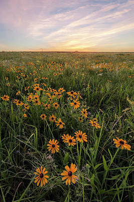 Photograph - Wildflowers by Scott Bean