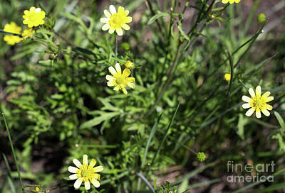 Photograph - Wildflowers by Suzanne Luft