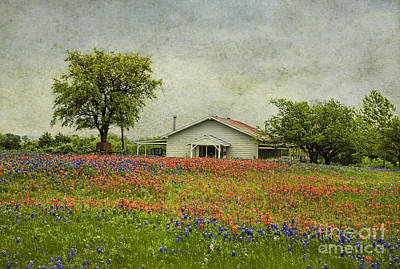 Photograph - Wildflowers Texas by Elena Nosyreva