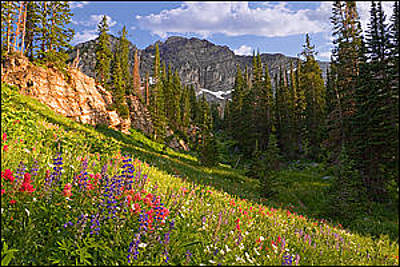 Photograph - Wildflowers by Utah Images