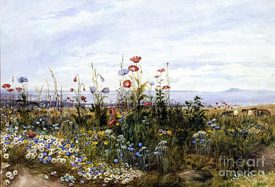 Painting - Wildflowers With A View Of Dublin Dunleary by Andrew Nicholl