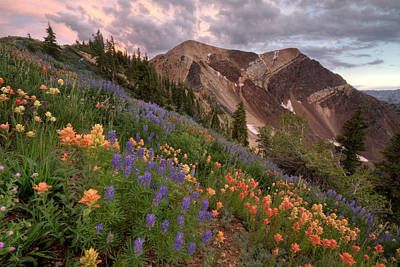Nature Photograph - Wildflowers With Twin Peaks At Sunset by Brett Pelletier