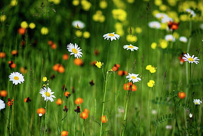 Photograph - Wildflowers2 by Dan Hefle