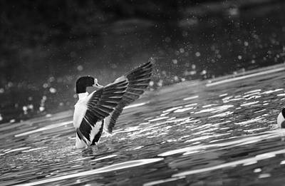 Photograph - Wildfowl Centre 1 by Phil Fitzsimmons