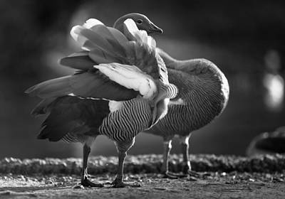 Photograph - Wildfowl Centre 2 by Phil Fitzsimmons