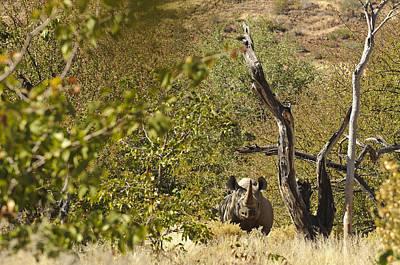 Rhinoceros Photograph - Wildlife - In The Bush by Andy-Kim Moeller