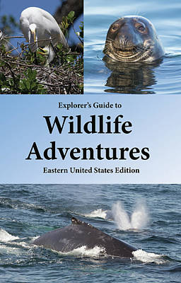 Photograph - Wildlife Adventures by Jeannette Hunt