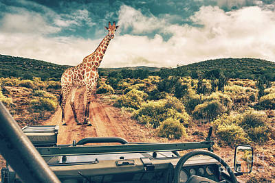 Photograph - Wildlife African Safari by Anna Om