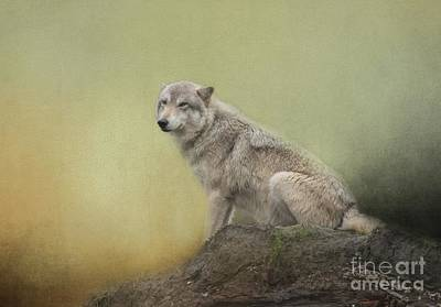 Wildlife Alaska Art Print