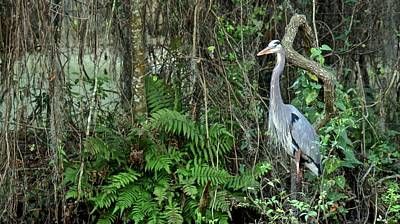 Photograph - Wildlife by Carol Bradley