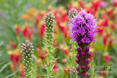 Photograph - Wildlife Garden by Chris Scroggins