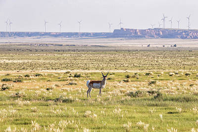 Photograph - Wildlife Meets Wind Power by Tony Hake
