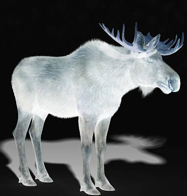 Wildlife Moose Art Print