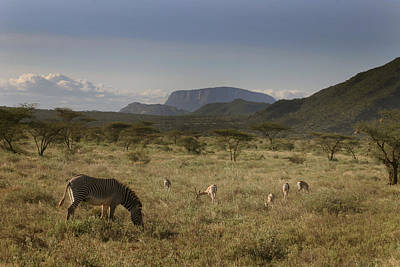 Photograph - Wildlife Of Samburu by Joseph G Holland