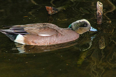 Photograph - Wildlife Reflections by Robert Hebert