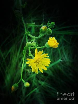 Photograph - Wildly Yellow by Maria Urso