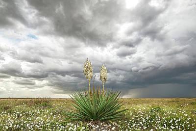 Photograph - Wildorado Yucca by Scott Cordell