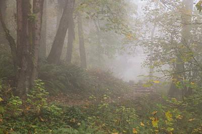 Photograph - Wildwood Trail Fog by Kunal Mehra