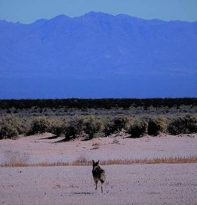 Photograph - Wile E Coyote Says by John Glass