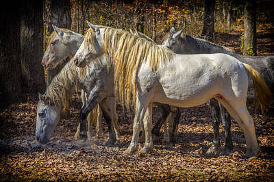 Photograph - Wild Horses Missouri Ozarks Dsc09347 by Greg Kluempers