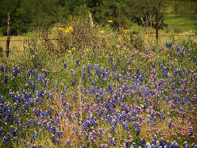 Photograph - Wilflowers In Texas by Charles McKelroy