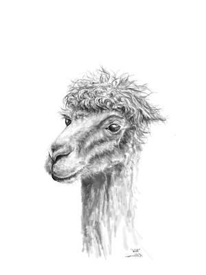 Drawing - Will by K Llamas