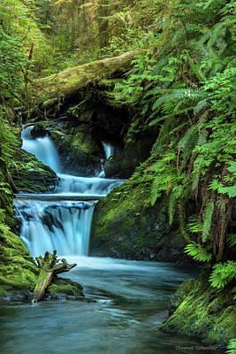 Photograph - Willaby Creek Falls - Quinault Rainforest by Expressive Landscapes Fine Art Photography by Thom