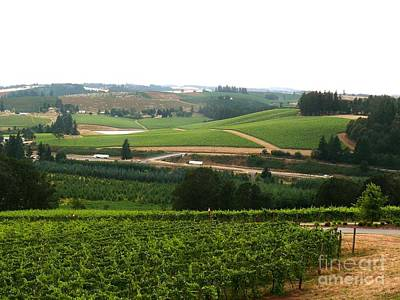 Photograph - Willamette Grape Country by Terri Thompson