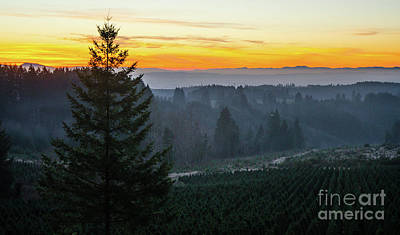 Photograph - Willamette Valley Sunset by Nick Boren