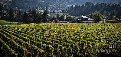 Photograph - Willamette Valley Vineyard And Farmhouse  by Bruce Block