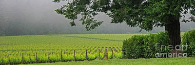 Photograph - Willamette Vineyard 0573 by Chuck Flewelling