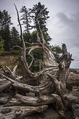Photograph - Willapa Driftwood by Robert Potts