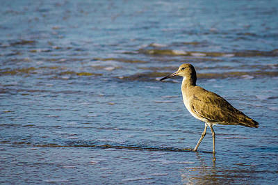 Photograph - Willet 2 by Randy Bayne