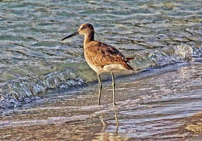 Photograph - Willet By The Sea by HH Photography of Florida