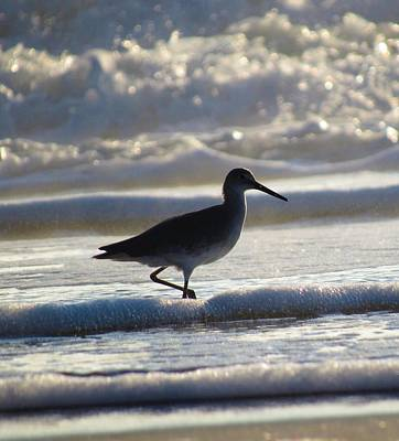 Photograph - Willet by Joshua Bales
