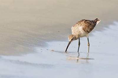 Art Print featuring the photograph Willet On Beach by Bob Decker