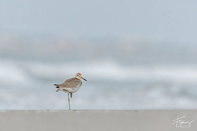 Photograph - Willet On One Leg by Francisco Gomez