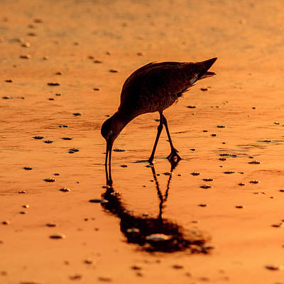 Art Print featuring the photograph Willet On Sunrise Surf by Steven Sparks